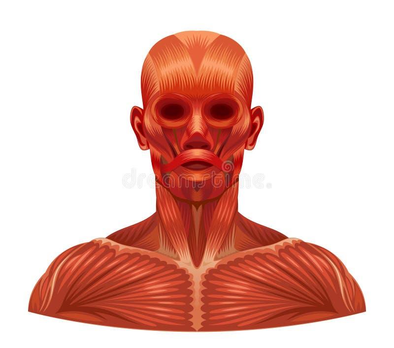 Spiergezicht vector illustratie