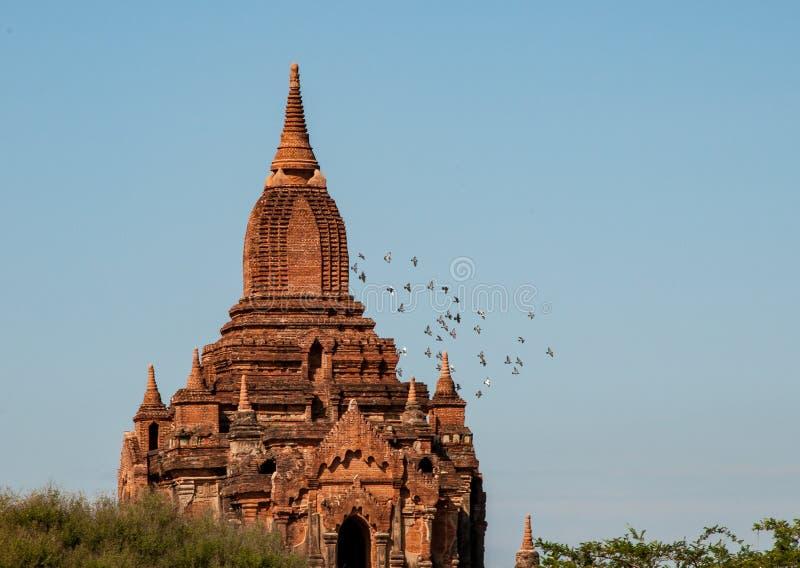 Spiersna av Seinnyeten Nyima Paya i Bagan fotografering för bildbyråer