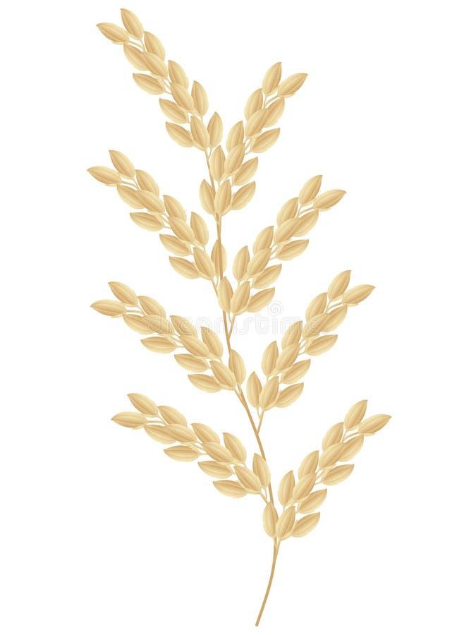 Spighetta della pianta di riso isolata su fondo bianco illustrazione vettoriale