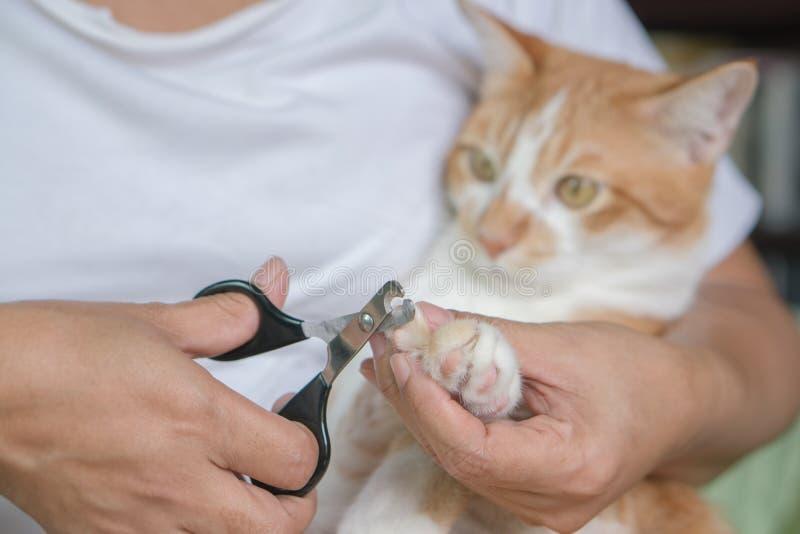 Spika katter länge för att klippa spika fotografering för bildbyråer