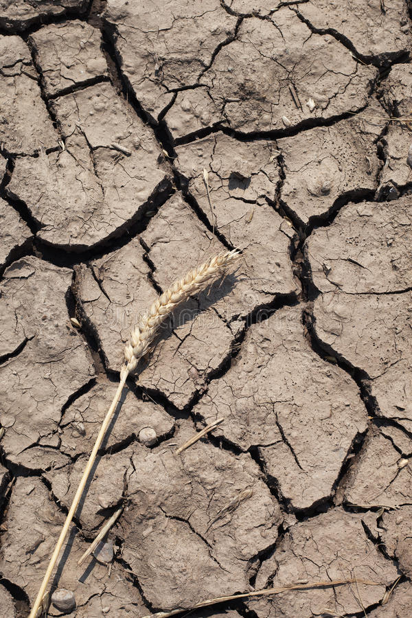 Download Spike and dry soil. stock photo. Image of broken, environment - 26090782