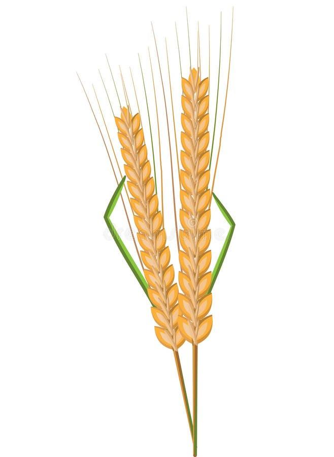 Spikelet, trigo, colheita ilustração do vetor