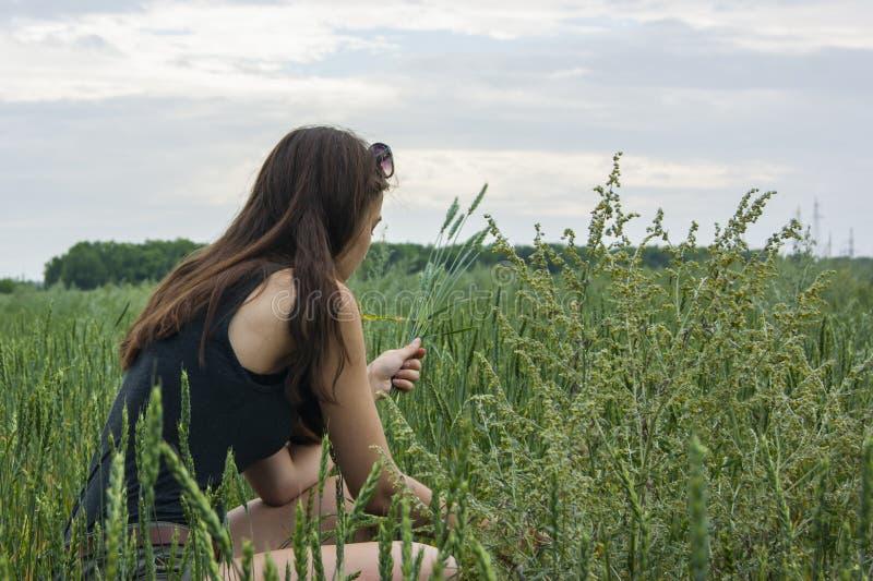 Spikelets do trigo da colheita da menina no campo imagem de stock