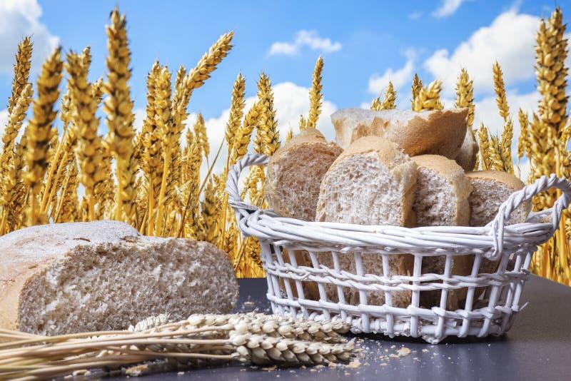 Spikelets do trigo e do pão cozido fresco contra o céu azul acima do campo dourado wheaten Orelhas do trigo foto de stock