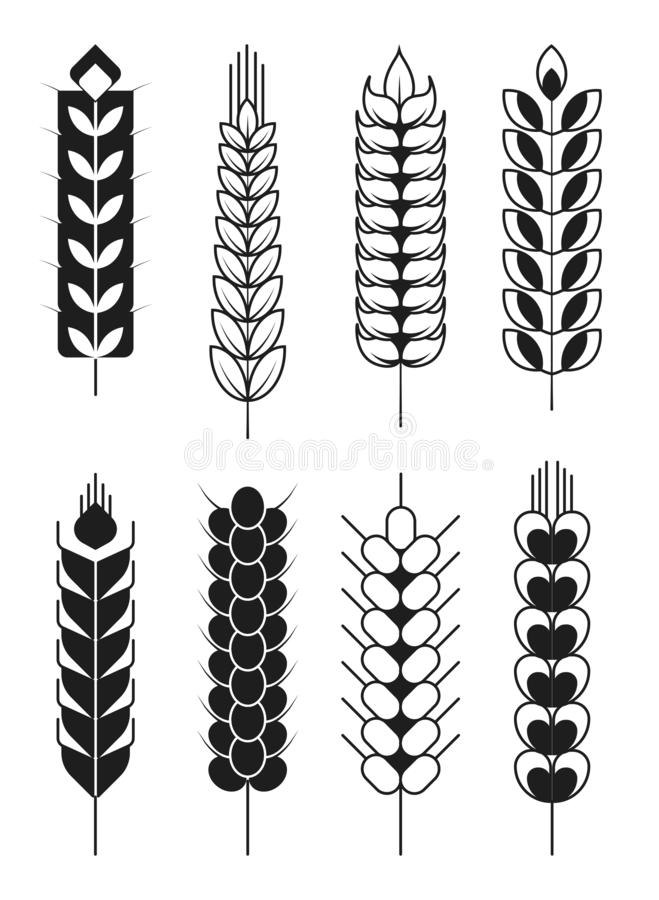 Spikelets ikony, zboża żyto lub banatka ucho lub i kolców badyle ilustracja wektor