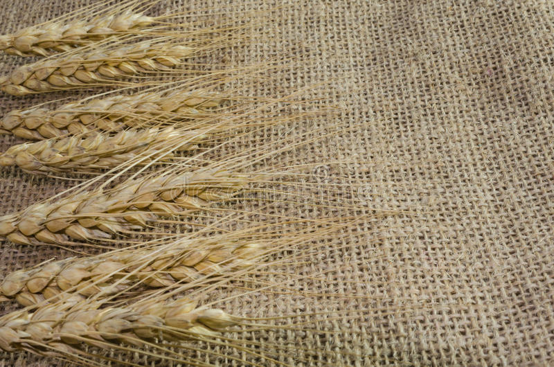 Spikelets of wheat on linen fabric, background from ,canvas. Spikelets of wheat on linen fabric, background from fabric stock image