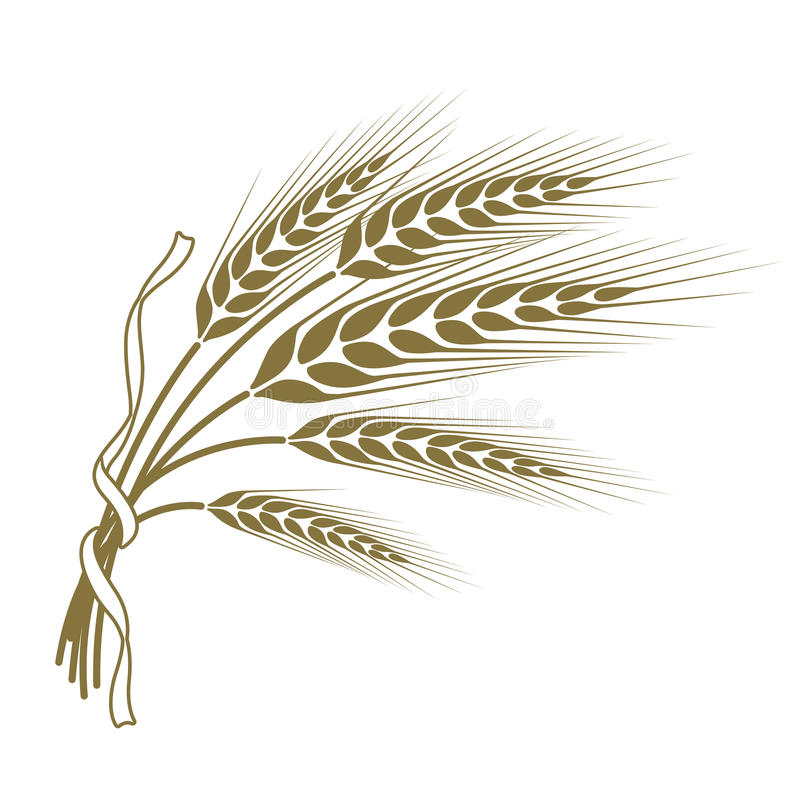 Spikelets of wheat tied with a ribbon vector illustration