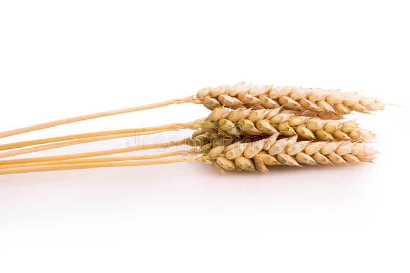 Spikelets of wheat on a white background stock photo
