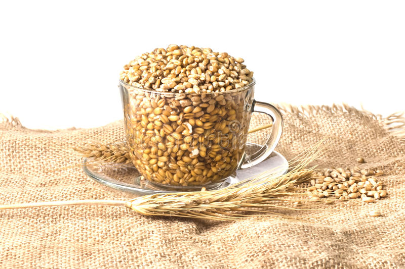 Spikelets of wheat with whole grains on the burlap stock photos