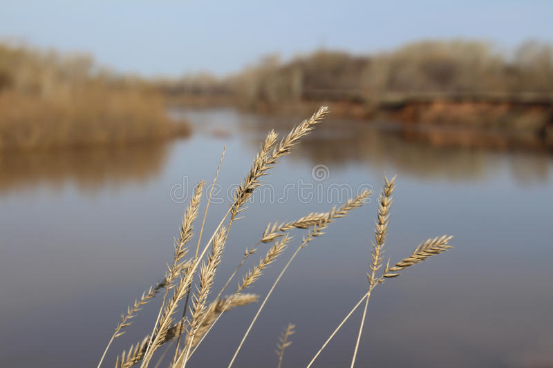 Spikes on the background of the river stock photos