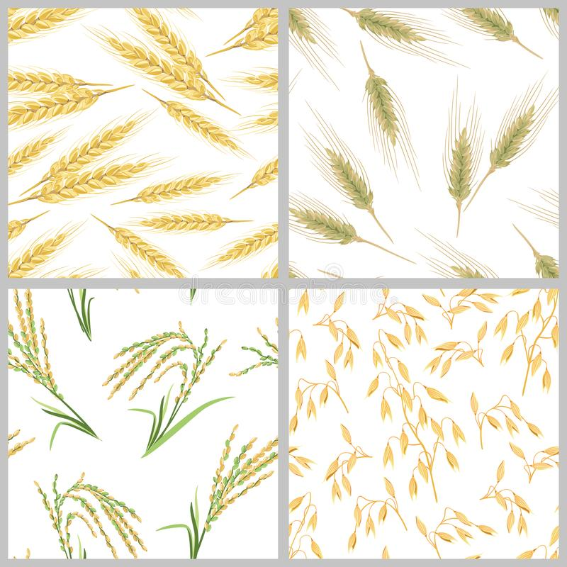 Spikes of wheat, oats, rice and rye. Set of grain ears seamless patterns. Grain ears set of seamless patterns. Spikes of wheat, oats, rice and rye on white vector illustration
