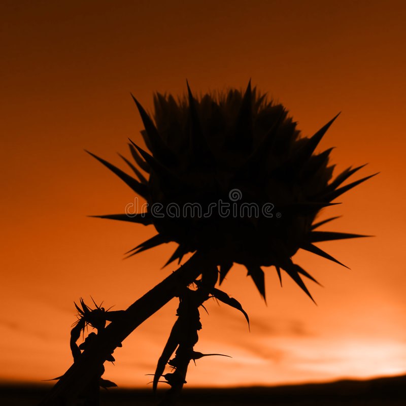 Spikey Flower stock images
