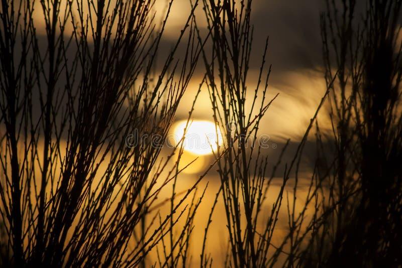 Spiky кусты стоковая фотография rf