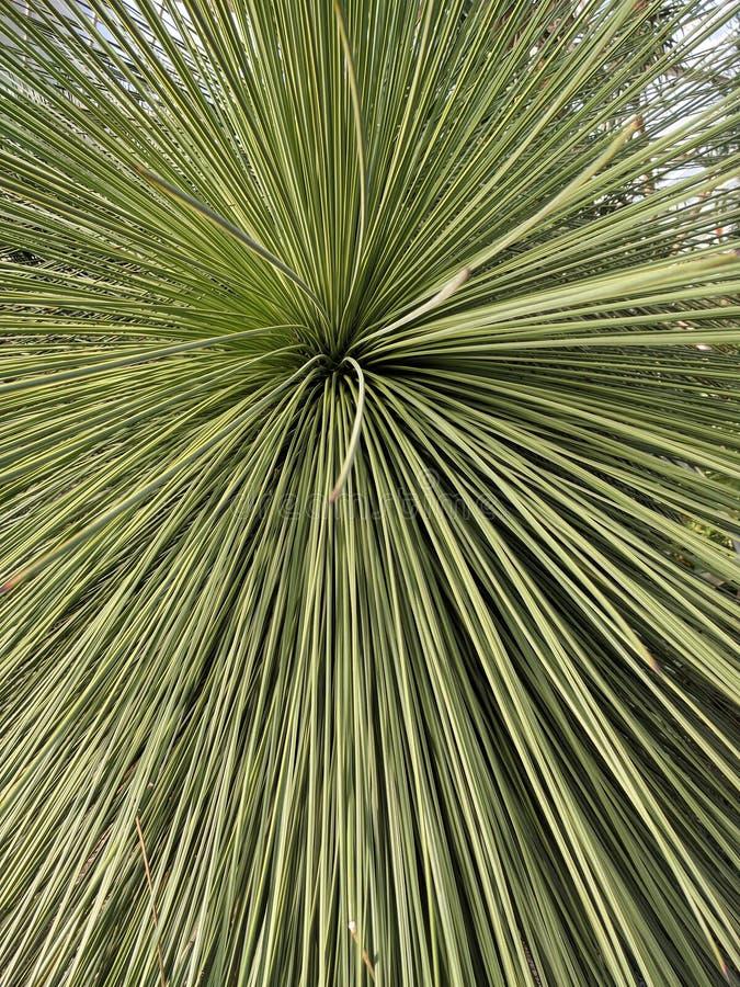 Spiky листья закрывают вверх стоковые фото