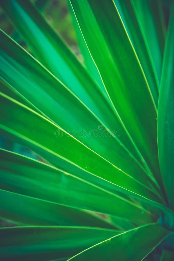 Spiky drzewka palmowego Pasiasty liść Tworzy Pięknego Naturalnego Geometrical wzór Wibrujących kolorów modnisia Modny tonowanie obrazy stock