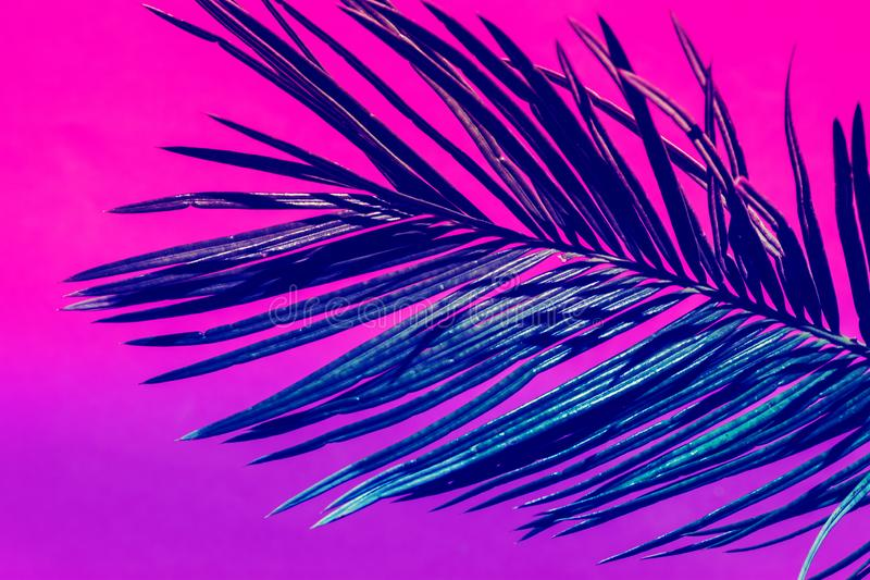 Spiky feathery palm leaf on duotone purple violet pink background. Trendy neon colors. Toned. Minimalist style. Contemporary unique creative image poster royalty free stock image