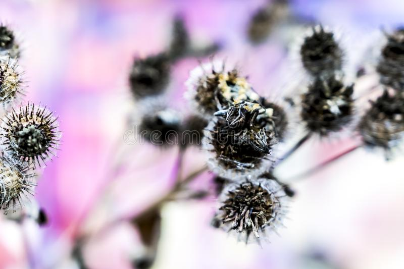 Spiky flower in autumn royalty free stock image