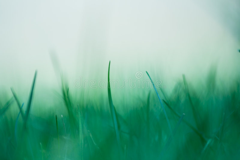 Spiky fresh spring grass royalty free stock photos