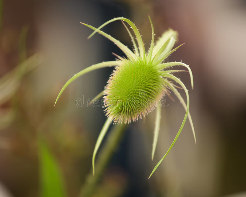 Spiky Green Plant. Macro shot of a alien like spiky green plant royalty free stock image