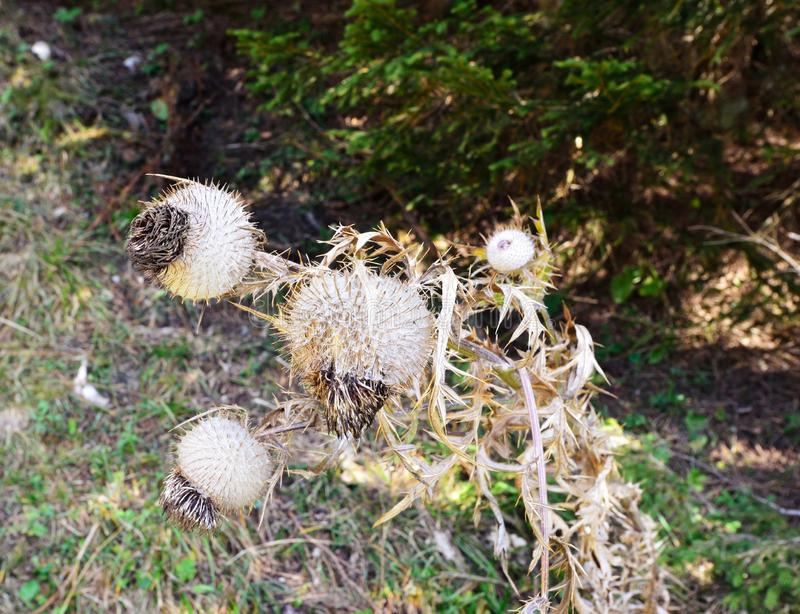 A spiky plant in the woods. A spiky little plant in the woods royalty free stock photos