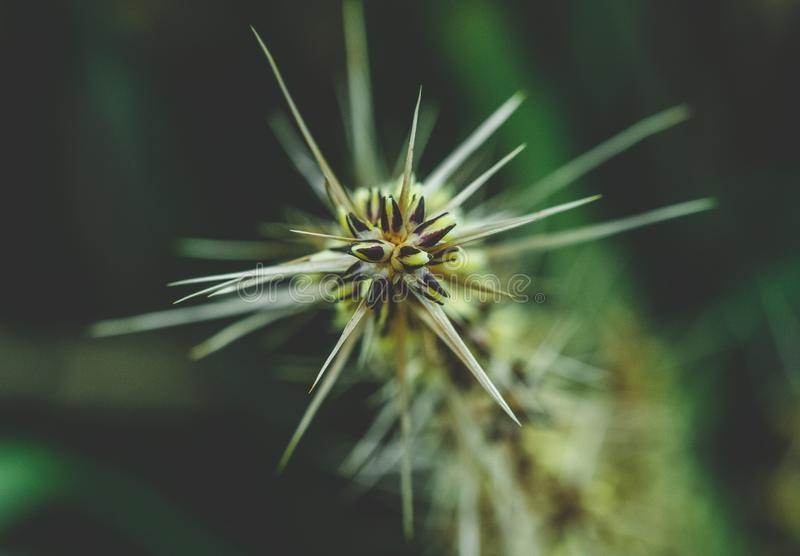 Spiky plant close-up royalty free stock images