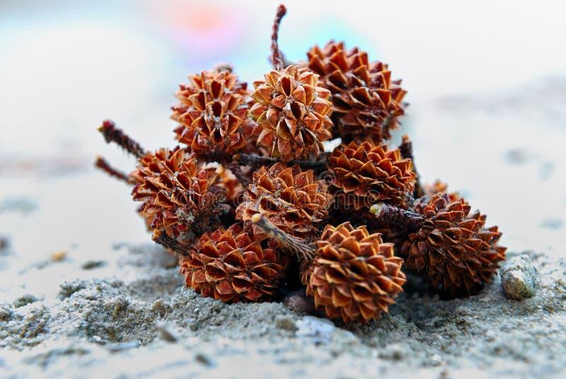 Spiky Seed. Shooting on beach side stock photo