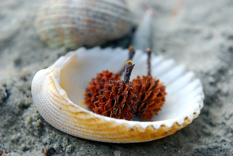 Spiky Seed on seashell. Spiky seed on beach seashell stock image
