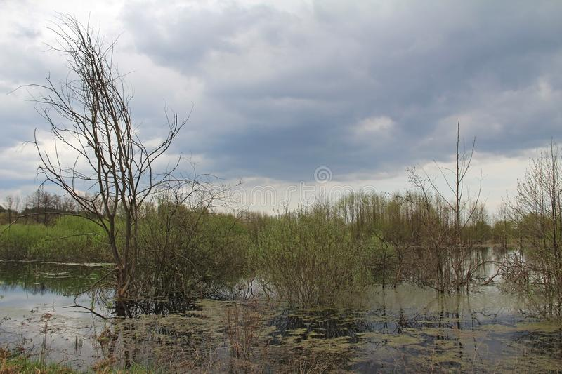 Spill of the river in the fields in early spring in cloudy weather stock photography