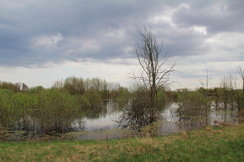 Spill of the river in the fields in early spring in cloudy weather royalty free stock photography