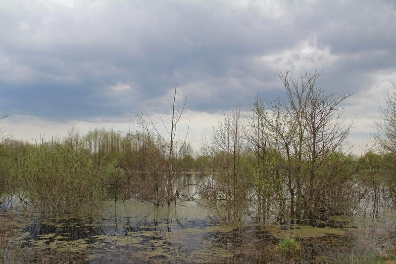 Spill of the river in the fields in early spring in cloudy weather. Russia stock photos