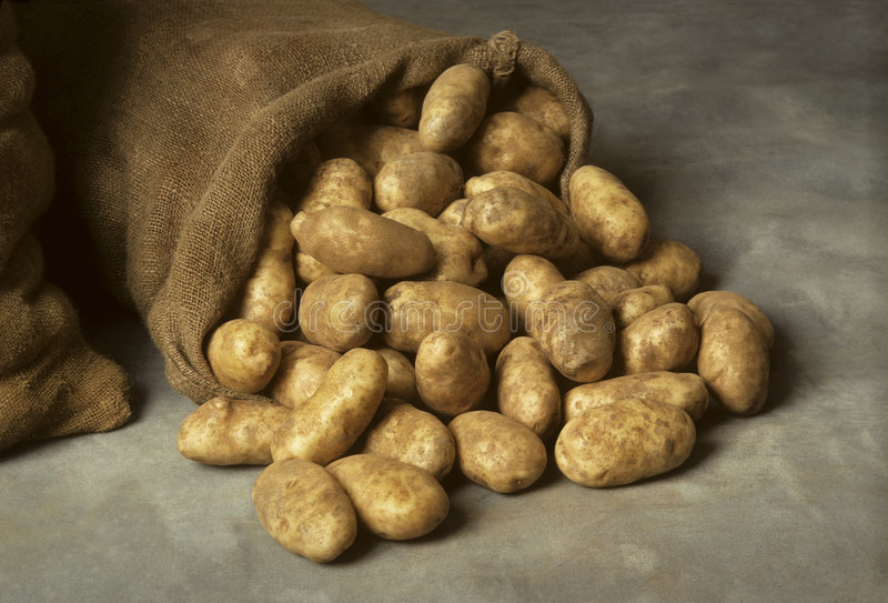 Spilled burlap sack of potatoes. A burlap sack of potatoes spilled onto a canvas surface royalty free stock images