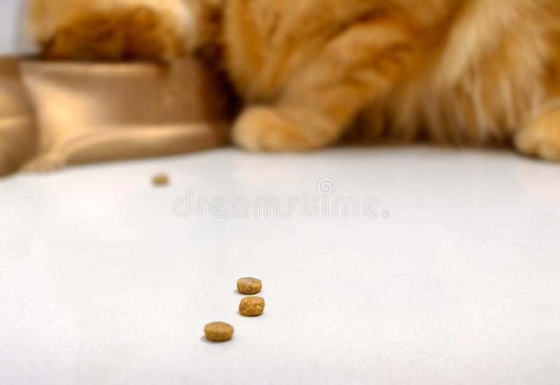 Spilled Processed Dry Cat Food on the Floor.  royalty free stock photography