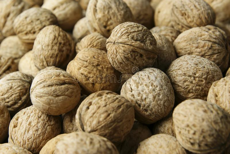 Spilled whole walnut heap. healthy food for brain. walnuts background stock image