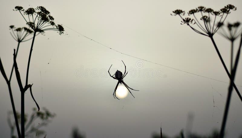 Spin bij zonsopgang royalty-vrije stock afbeeldingen