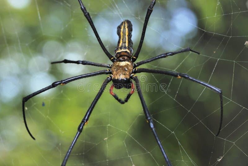 Spin die een Web maakt royalty-vrije stock foto's
