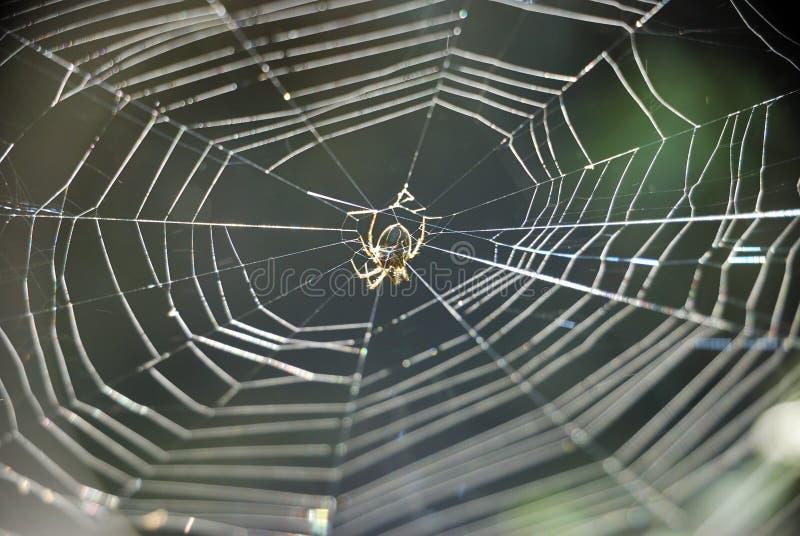 Spin die een Web maakt royalty-vrije stock fotografie
