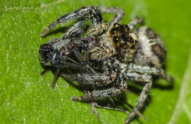 Spin die insect eten royalty-vrije stock afbeeldingen