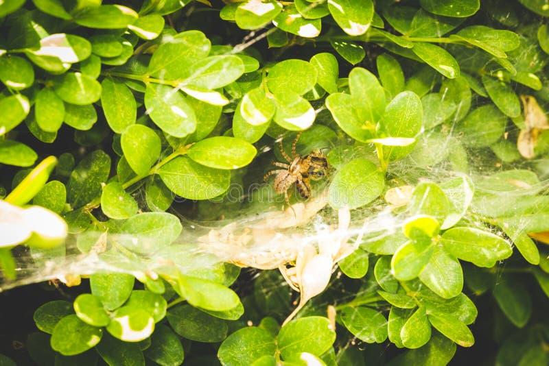 Spin die prooi in zijn Web op een installatie eten stock fotografie