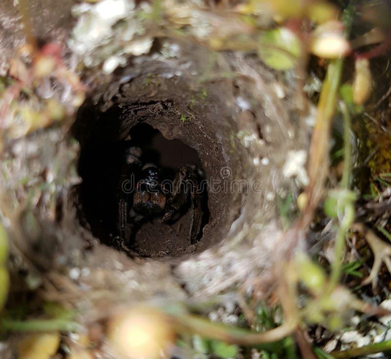 Spin in een gat wordt verborgen dat stock fotografie