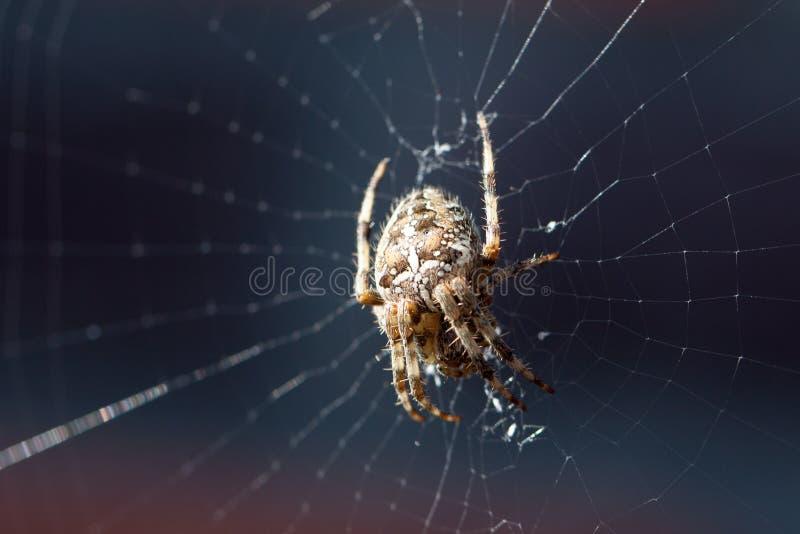 Spin in een Web in de zon stock fotografie