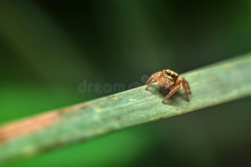 Spin in het blad, gekleurde achtergrond stock afbeeldingen