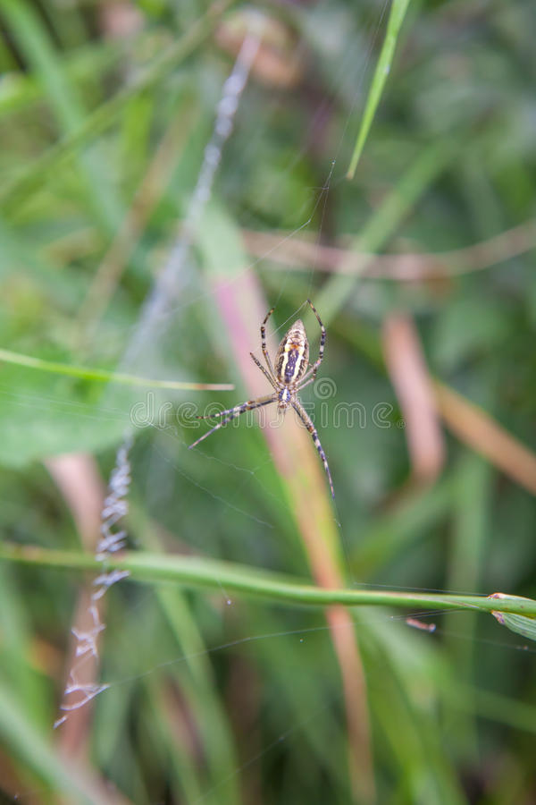 Spin op de groene achtergrond stock foto