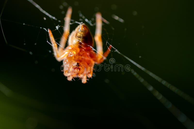 Spin op spinnewebben stock afbeeldingen