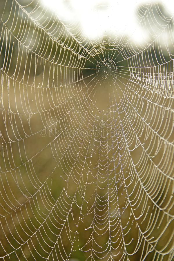 Spin` s Web met dalingen van dauw bij dageraad royalty-vrije stock foto's