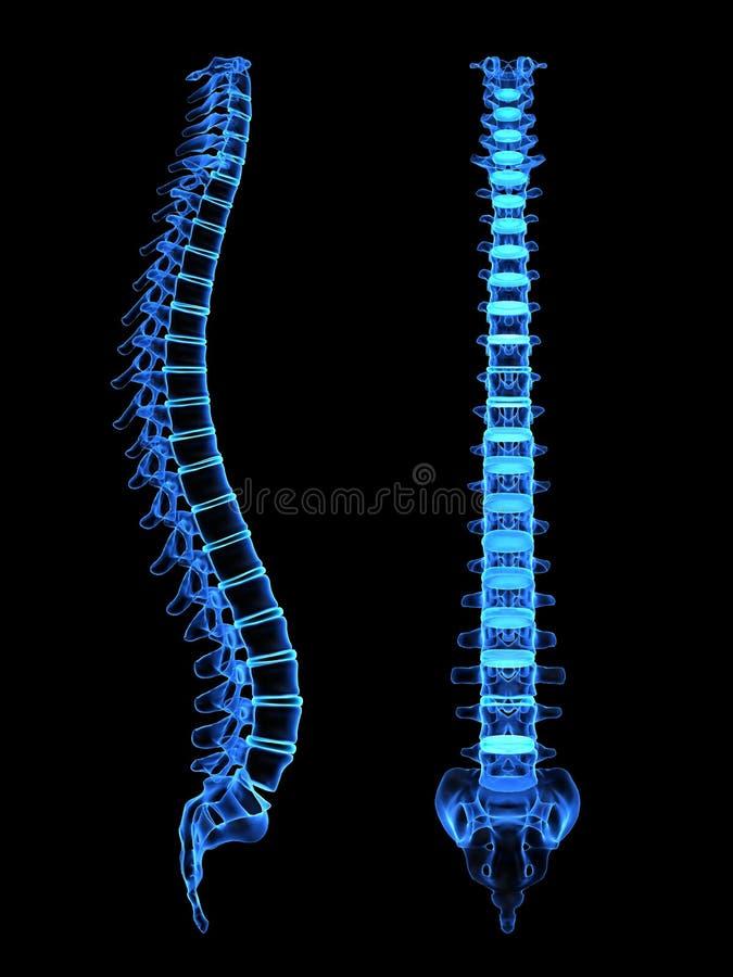 spina dorsale 3d illustrazione di stock