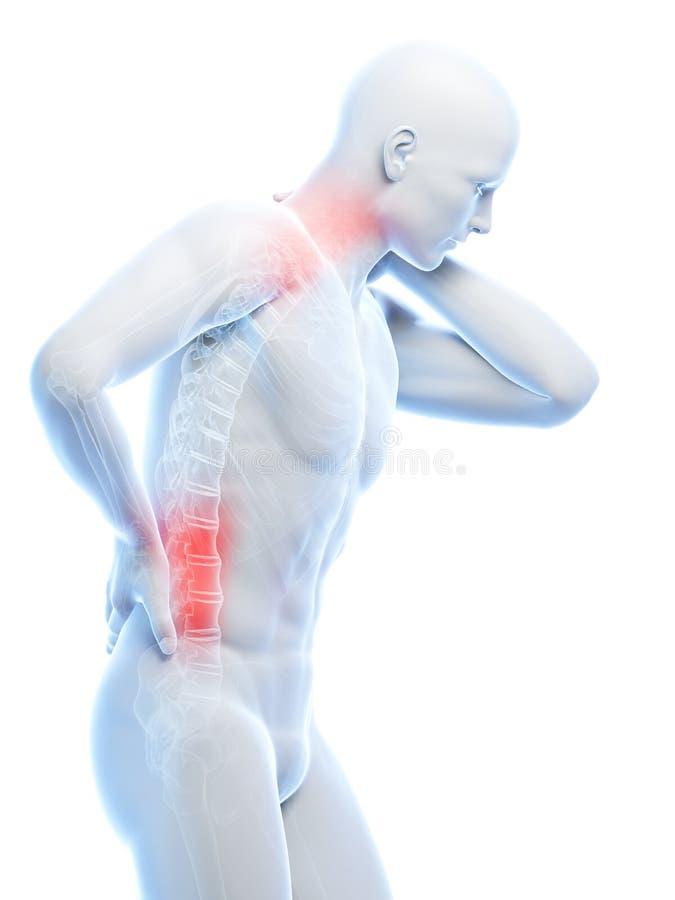 Spina dorsale evidenziata illustrazione di stock