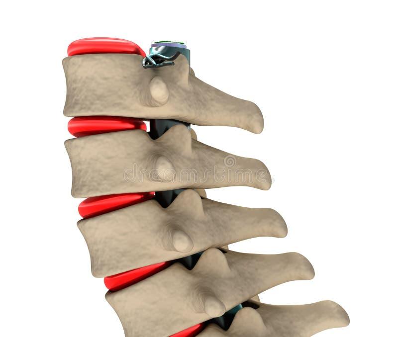Spina dorsale umana, illustrazione 3D illustrazione vettoriale