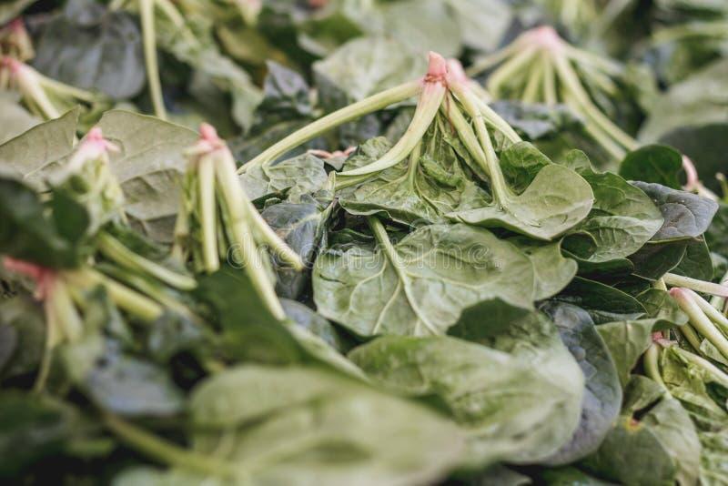 spinach imagem de stock royalty free