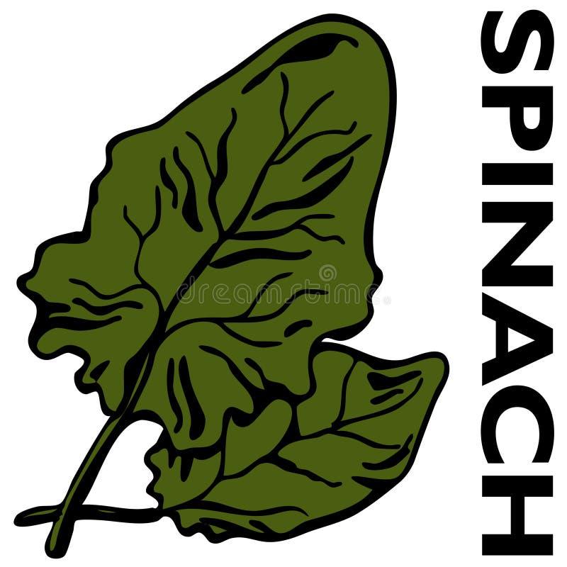 Spinach stock illustration