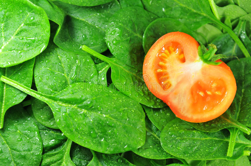 Download Spinach stock image. Image of leaves, seeds, vegetables - 18539117